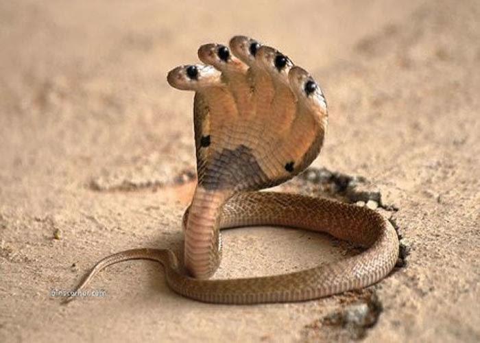 3d Celebrity Wallpapers World Best Dangerous Snake Hd Wallpapers Hd Wallpapers Blog