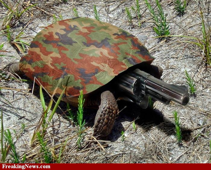 Daily amazing fun funny pictures of animals with guns - Pictures of funny animals with guns ...