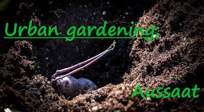 http://www.amor-und-kartoffelsack.de/2017/04/urban-gardening-aussaat-der-kartoffeln.html
