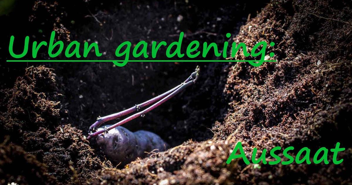 amor kartoffelsack urban gardening aussaat der kartoffeln. Black Bedroom Furniture Sets. Home Design Ideas