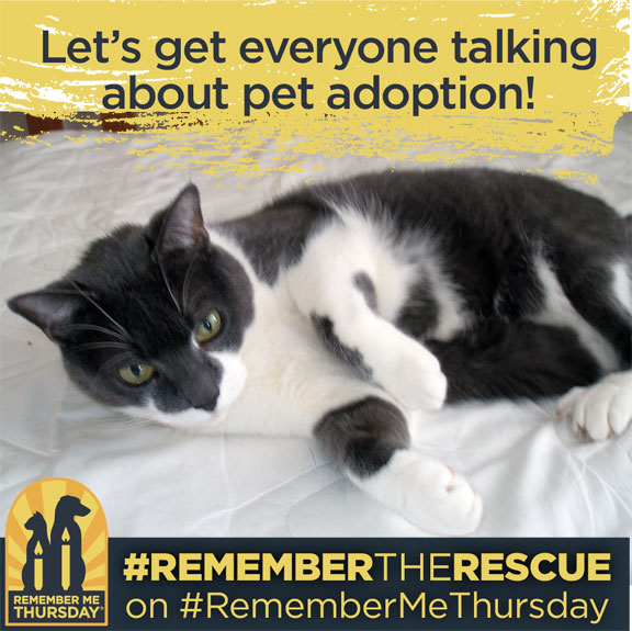 Shining a Light on Pet Adoption