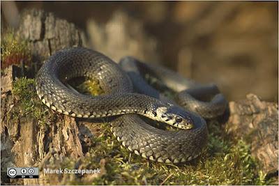 serpiente sobre superficie de corteza de madera y pasto