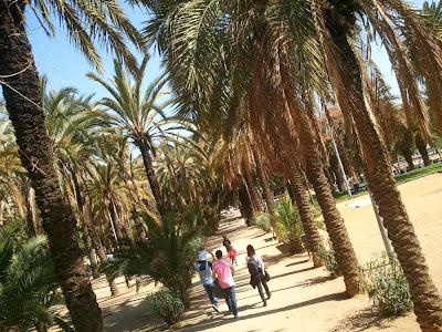 Palms in Joan Miró Park