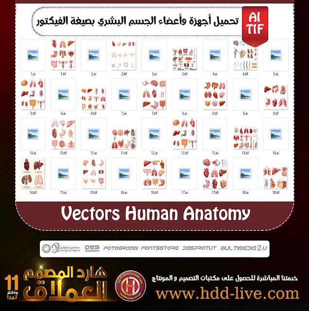 تحميل أعضاء وأجهزة الجسم البشري بصيغة الفيكتور