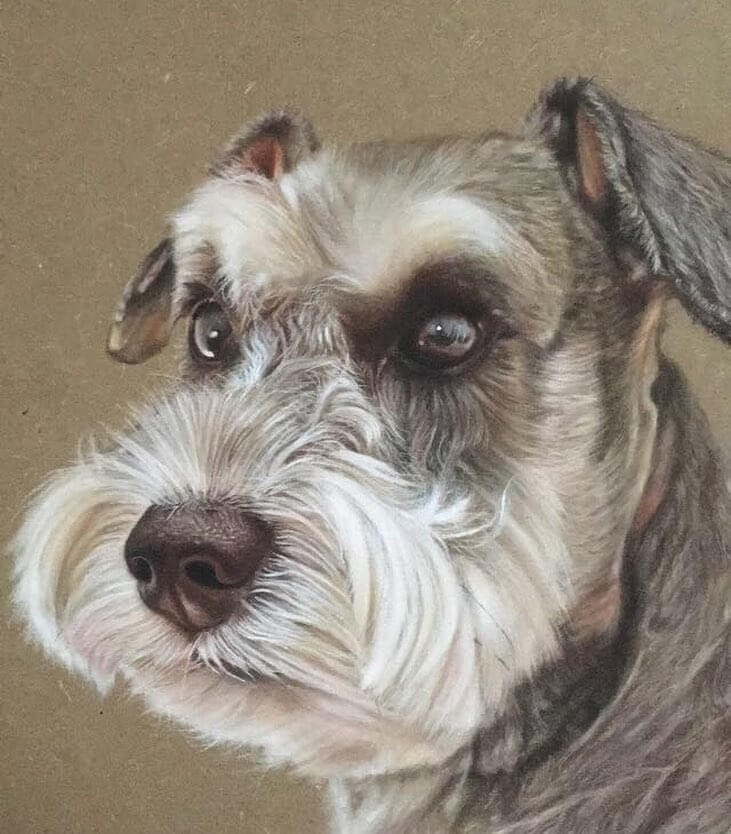 09-Miniature-Schnauzer-Ivan-Hoo-Domestic-and-Wild-Animal-drawings-and-paintings-www-designstack-co