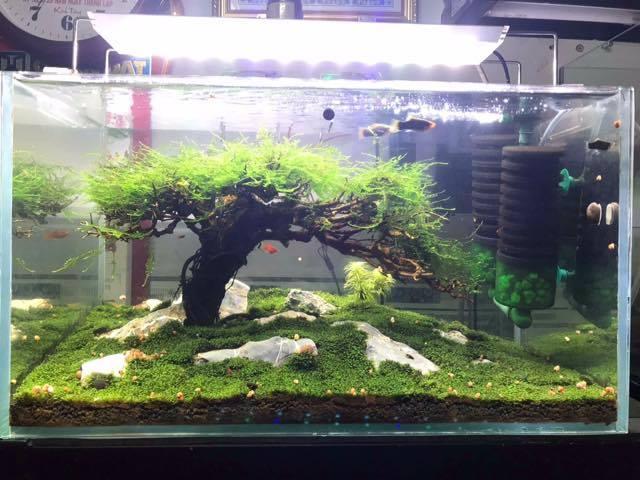 Hồ thủy sinh chơi rêu mini fiss của bạn Thành Nam