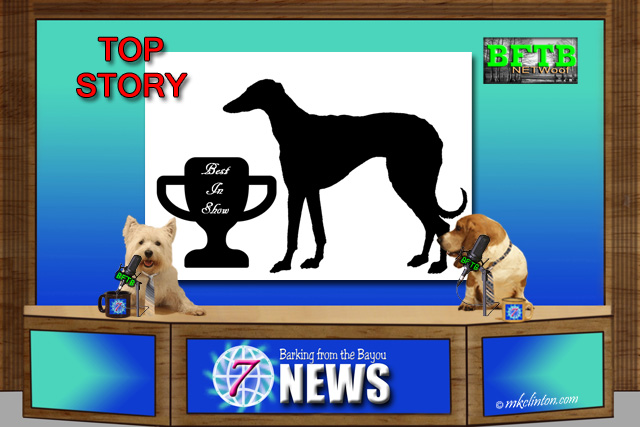 BFTB NETWoof News Top Story Greyhound wins National Dog Show