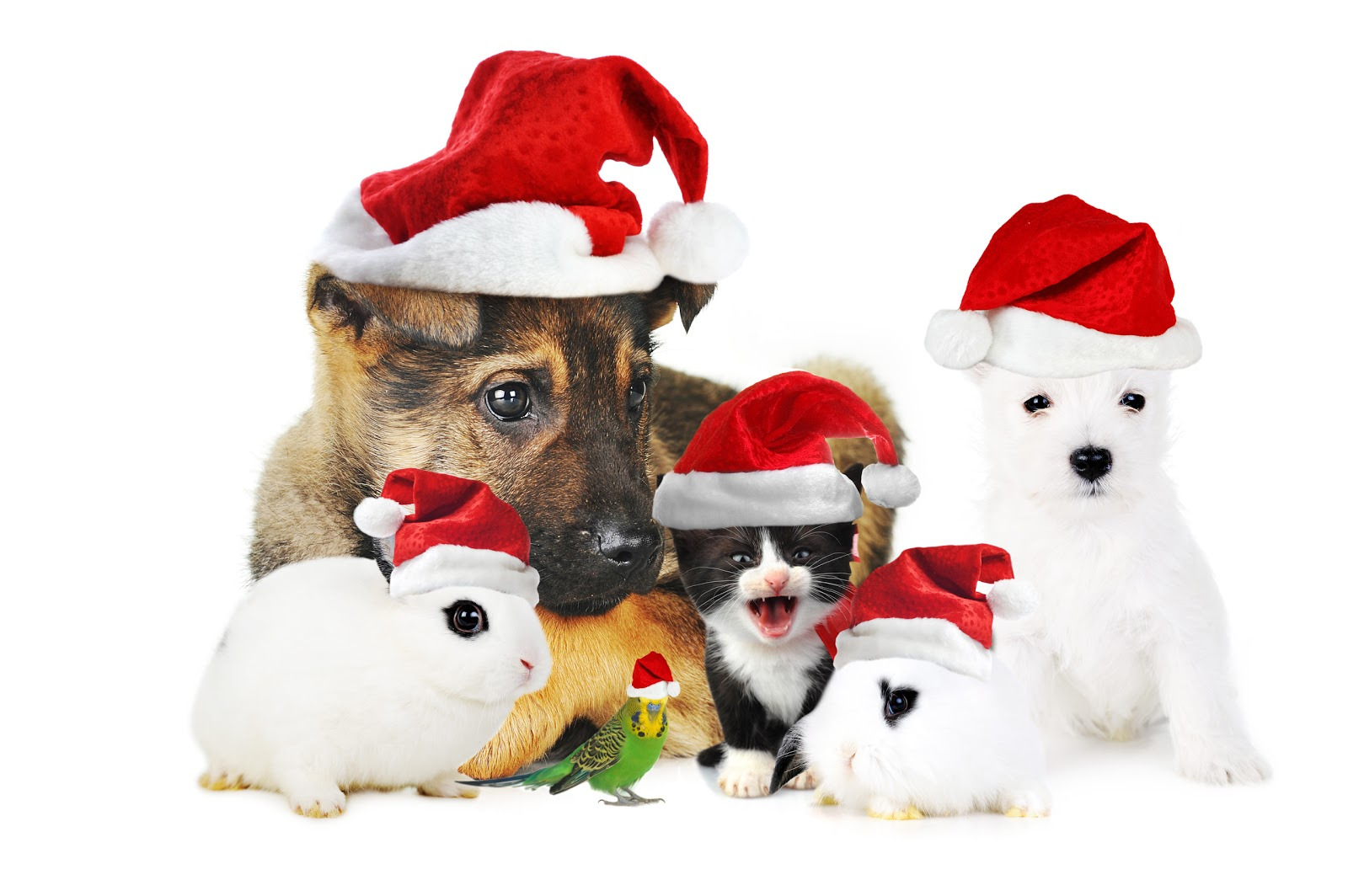Animal Shelter Christmas Cards