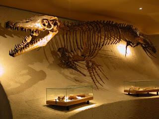 Fósil de Mosasaurus