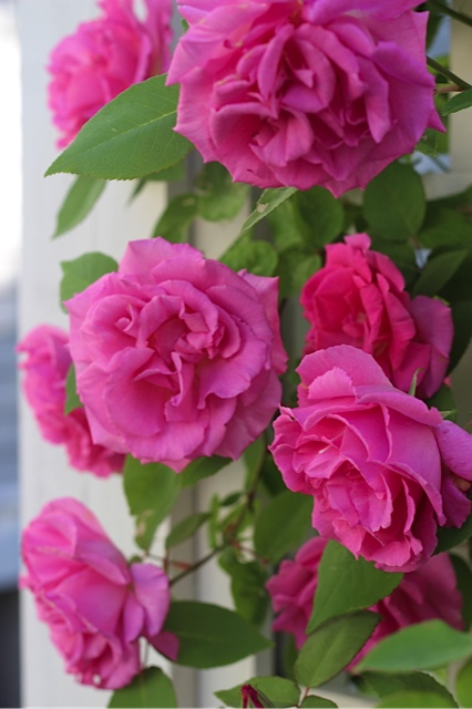 Love Garden Roses: An Urban Cottage: Guest Bathroom Progress