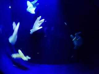 リヴォルノ水族館のクラゲに似たビニール手袋