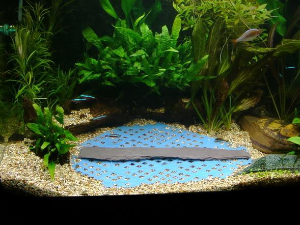 Hướng dẫn trải nền bằng rêu ricca - chuẩn bị nhựa và ướm thử trong hồ thủy sinh