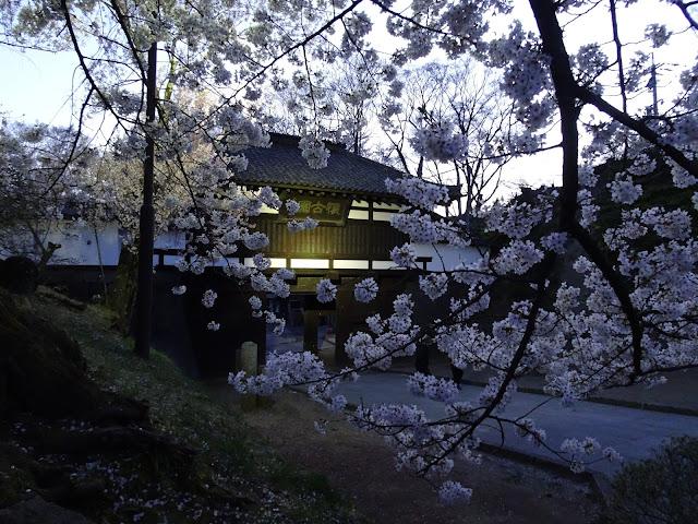 Komoro Kaikoen cherry blossom