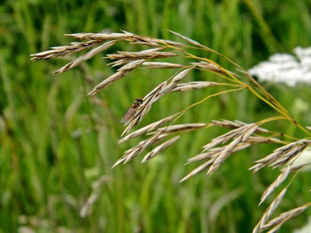 owad, łąka, lato, przyroda