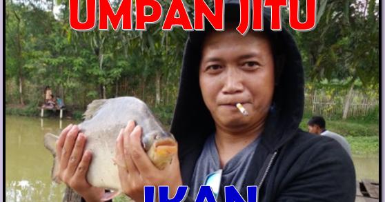 Empat Macam Umpan Jitu Untuk Mancing Ikan Bawal Aliems Journey