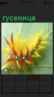 По ветке ползет гусеница желтого цвета с красными полосками по бокам