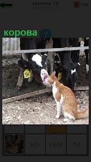 Корова из - за ограждения облизывает кошку, которая сидит рядом