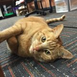 Oliver the Library Cat