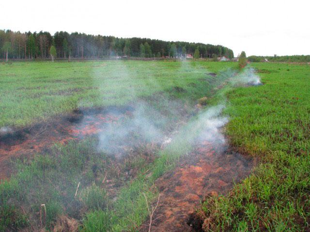 Торфяной пожар произошёл в Сергиево-Посадском лесничестве