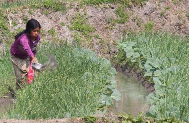 အိခ်ယ္ရီေအာင္ (Myanmar Now) ● ရင္းႏွီးျမႇဳပ္ႏွံမႈနဲ႔ အစိုးရအကူအညီကို ငံ့လင့္ေနတဲ့ ခ်င္းျပည္နယ္ စိုက္ပ်ဳိးေရးလုပ္ငန္း