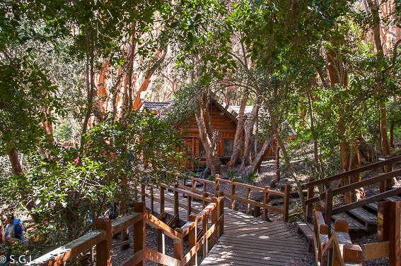 Recorrido por Argentina. Bosque de Arrayanes en Bariloche