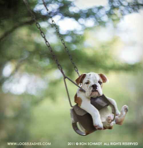 Foto de perro columpiandose