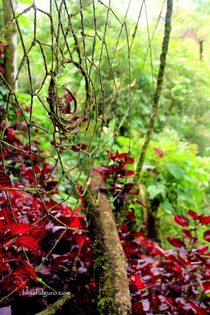 Baguio Travel Guide Blog