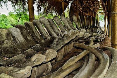 Tulang ikan paus biru di ile ape