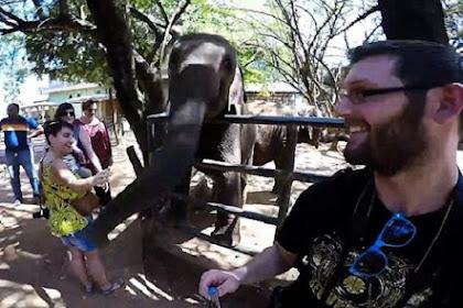 Ingin Selfie dengan Tongsis, Pria Ini Ditampar Gajah