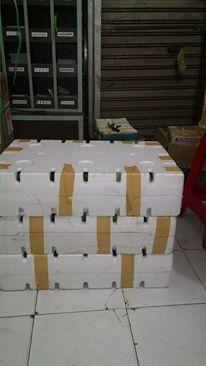 jual bibit bibit unggul | pengiriman bibit tanaman | proses pengiriman bibit tanaman | pengiriman bibit via bandara
