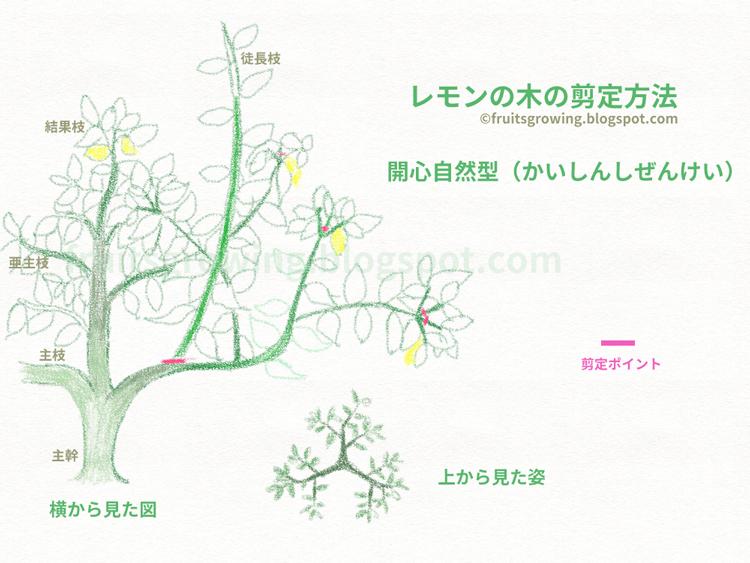 レモンの木の剪定方法