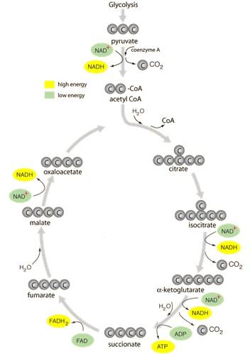Proses Terjadinya Reaksi Kimia : proses, terjadinya, reaksi, kimia, Sebutkan, Tahapan, Proses, Terjadinya, Reaksi, Kimia