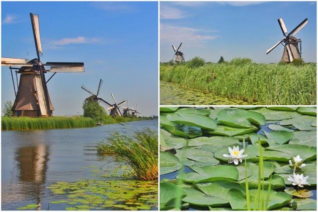 Red de molinos holandeses y nenúfares en canal en Kinderdijk en los Paises Bajos