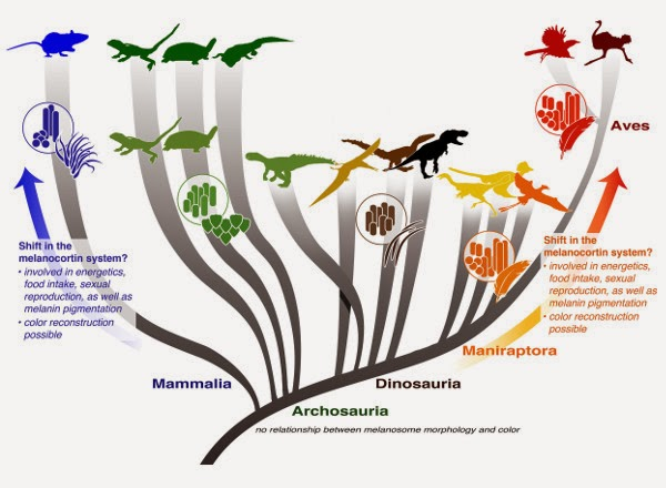 Warna Dinosaurus, evolusi dinosaurus