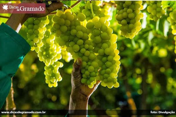 O belo Vale dos Vinhedos de Bento Gonçalves será o palco da Wine Run 2014