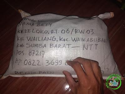 Benih Padi TRISAKTI Pesanan MAMA BETY Sumba Barat, NTT.  (Sebelum di Packing)