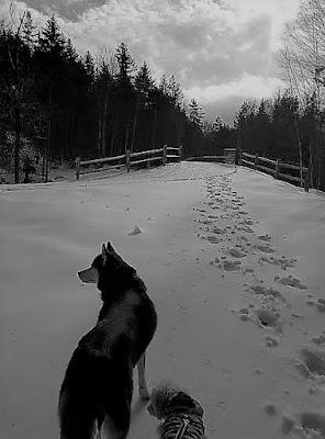 Black and White Sunday photography blog hop