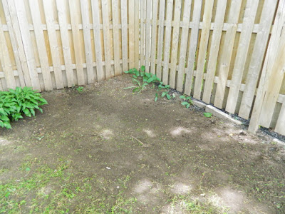 Beach Hill backyard cleanup after by Paul Jung Gardening Services Toronto