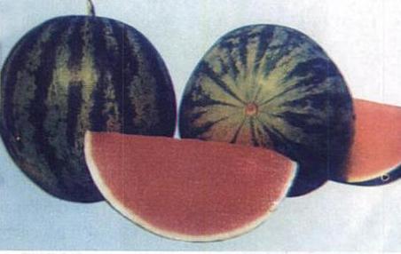 Buah Semangka Untuk Peradangan