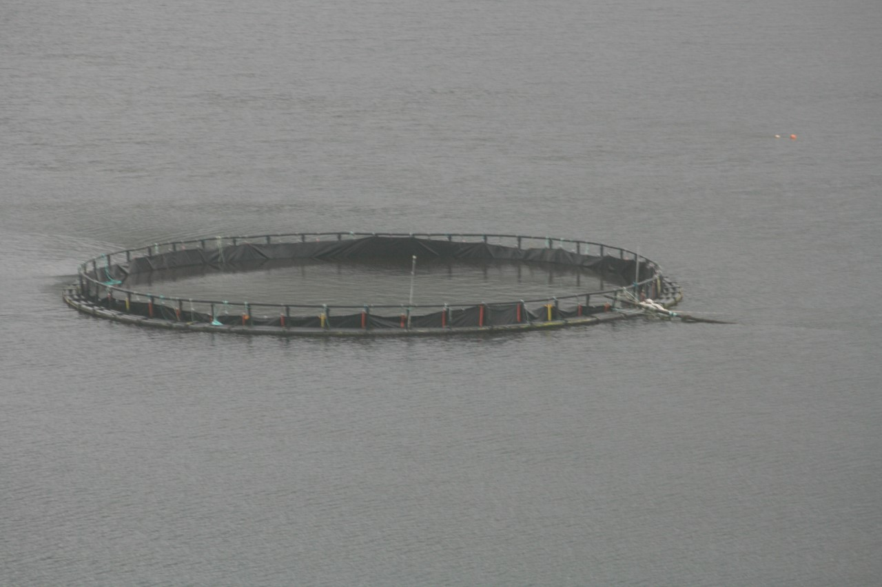 Galway Bay Against Salmon Cages (GBASC) welcomes the