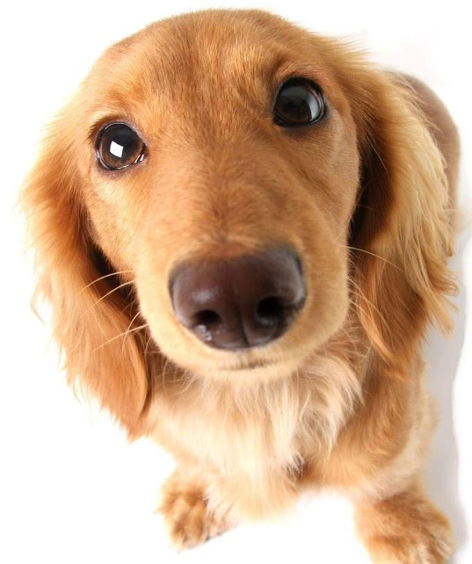 ¿Qué beneficios para la salud tiene la mirada de tu perro?