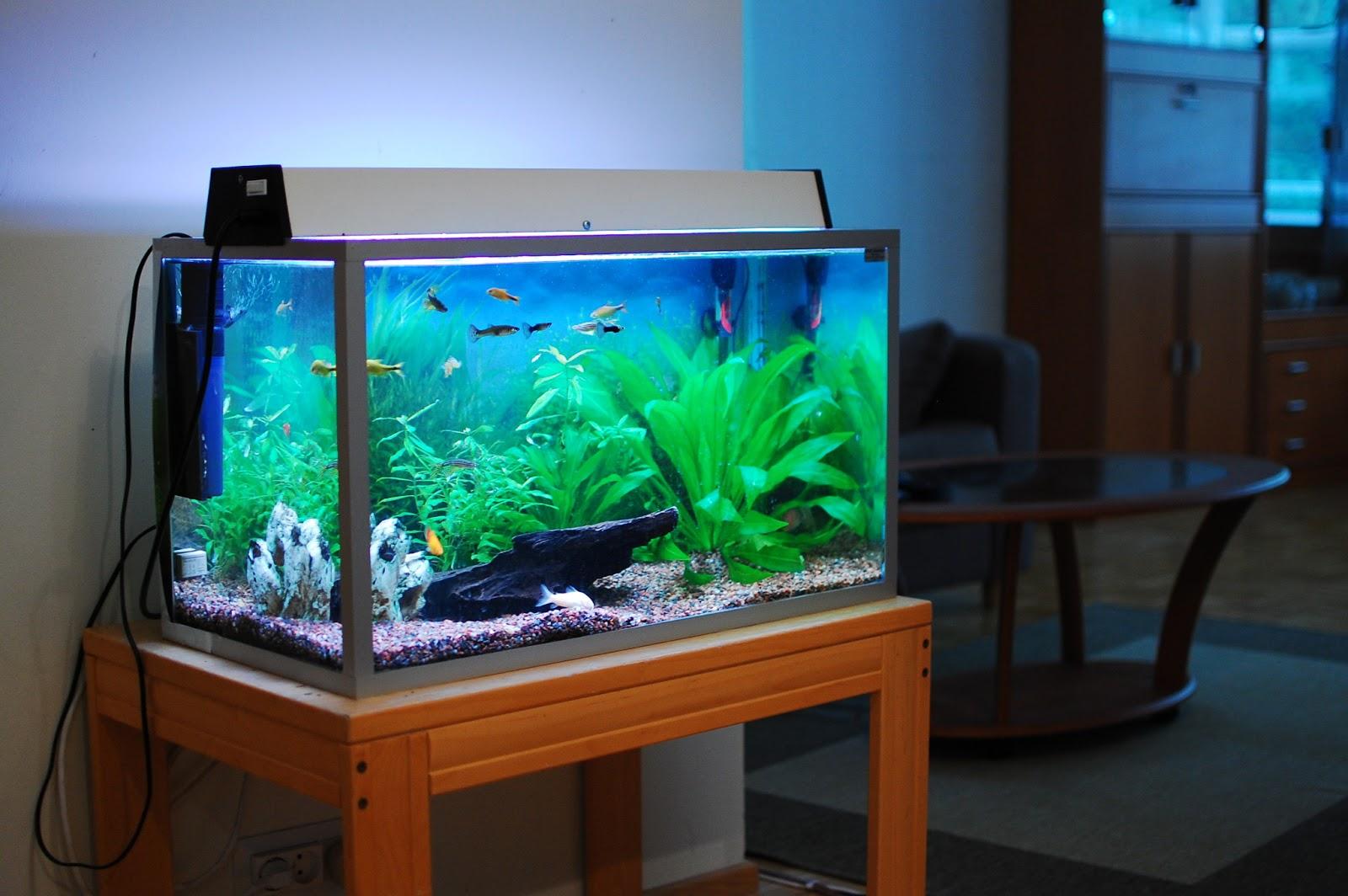 teknik membuat akuarium | informasi penyuluhan perikanan