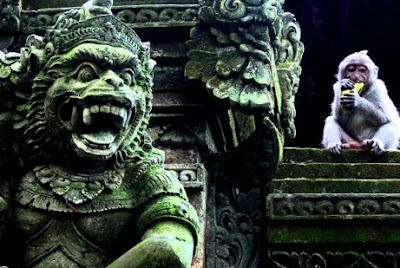 Monkey forest Tempat Wisata selain Pantai di Bali