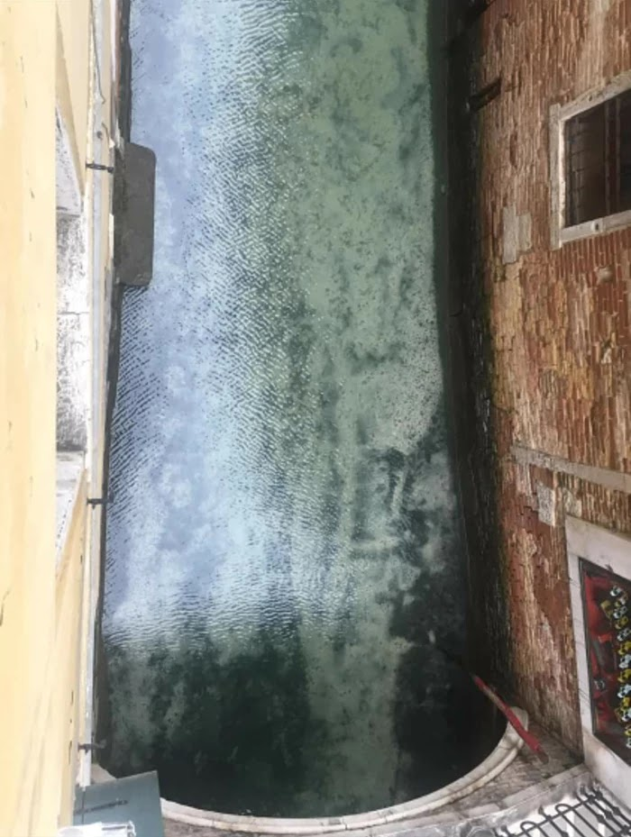 Fish, Dolphins, And Swans Swim In Crystal Clear Post Corona Virus Venice Canals