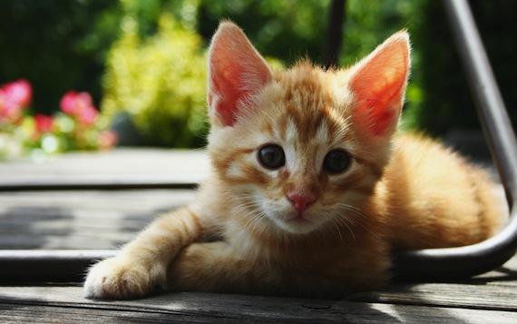 Best Cute Cats Hd Wallpapers Hdpixels