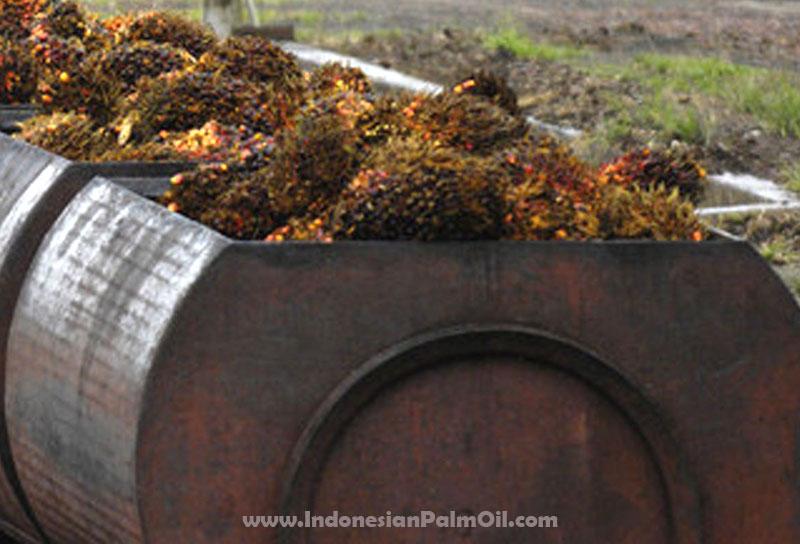 Produksi Minyak Sawit Mentah Indonesia (CPO) Untuk Bulan Juli Tembus 2,6 Juta Ton
