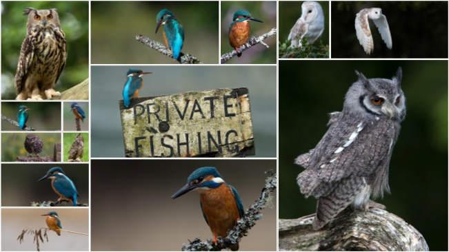 تحميل 14 صورة جودة عالية للطيور