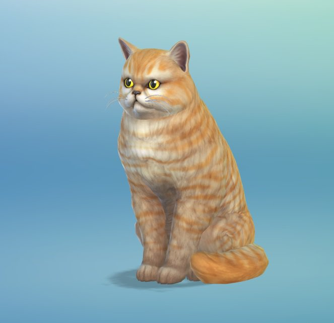 Sim  Cats And Dogs Lp