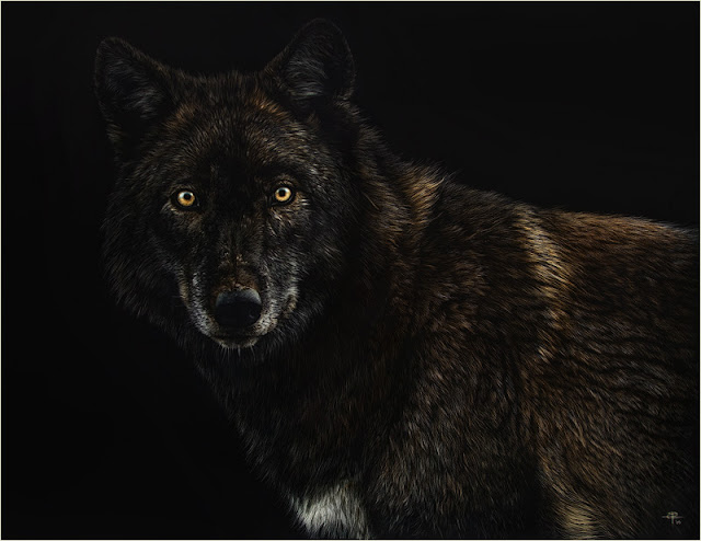 La Ciencia De La Vida Dibujos De Animales Muy Realistas De