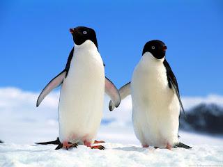 PINGUIN PALING ROMANTIS